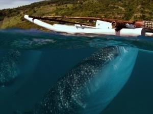 Oslob Whale Watching Tour Fotos