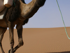 One Night Desert Tour Marrakech To Zagora Dunes Fotos