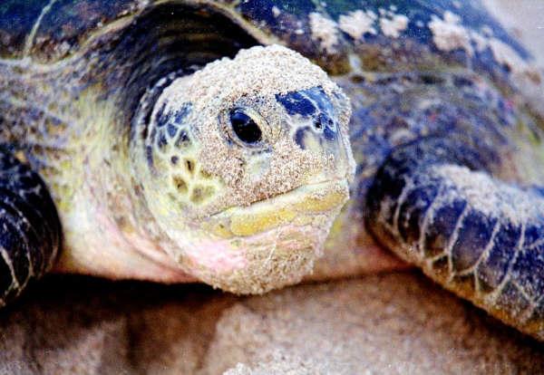 Turtle Beach & Desert Trip Photos