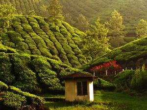 Kerala package 2Night 3Days