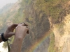 visit Murchison Falls and gorilla safaris at bwindi in Uganda