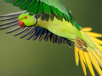 Bird Photography in China