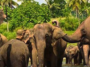 Tranquility of the Hills and the Elephants