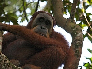 2 Days Bukit Lawang Jungle Trek