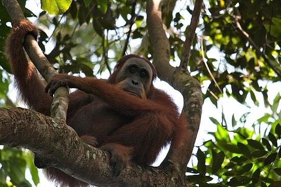 2 Days Bukit Lawang Jungle Trek Photos