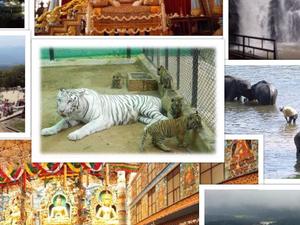 Bangalore, Mysore, Coorg Tour Fotos