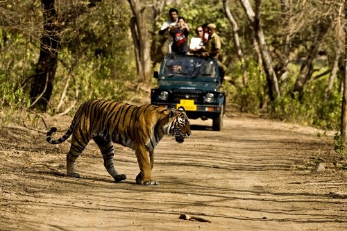Jim Corbett National Park Photos