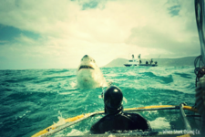 Shark Cage Diving Experience