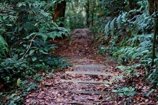 Foot Path Trek Photos