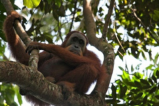 Full Day Bohorok Orang Utan Tour Photos