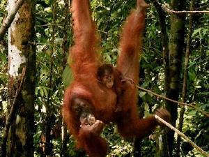 Sumatera Expedition - Bikit Lawang Jungle Trip Fotos