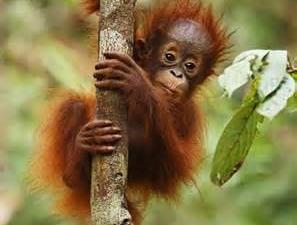 Sumatera Expedition - Amazing Trip Fotos