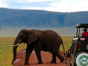 The Best of Africa Safari Photos