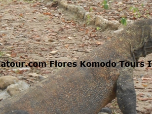 Tours Komodo National Park Photos