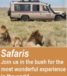 Tanzania Famous Safari