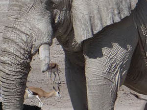 Discover Etosha National Park (Safari) Fotos