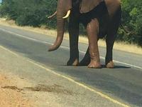 Ele In Road