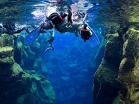Snorkle In Arctic Waters? Why Not! Try Our Into The Blue Tours.