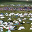The Tent City Once Tibet Special Festival In Summer Season