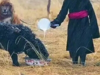 The Tibet Nomad Life