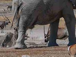 Best of Etosha Accommodated Safari Fotos