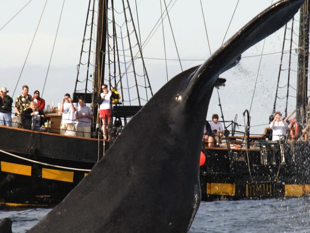 Thar She Blows Whale Watching Pirate Cruise Photos