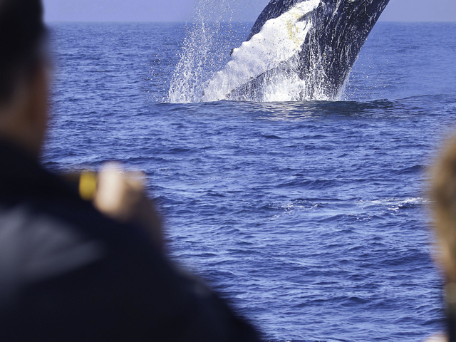 Cabo Escape Whale Watching Cruise Photos