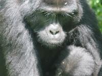 Gorilla Tracking Special Bwindi