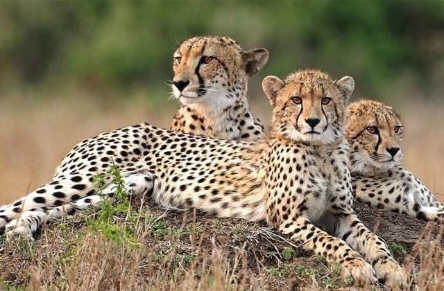 Safari in Kenya and Tanzania combine Photos