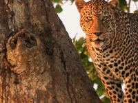 Flying Trip to Kenya's Best Wild Areas