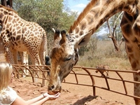 Nairobi and its Environs