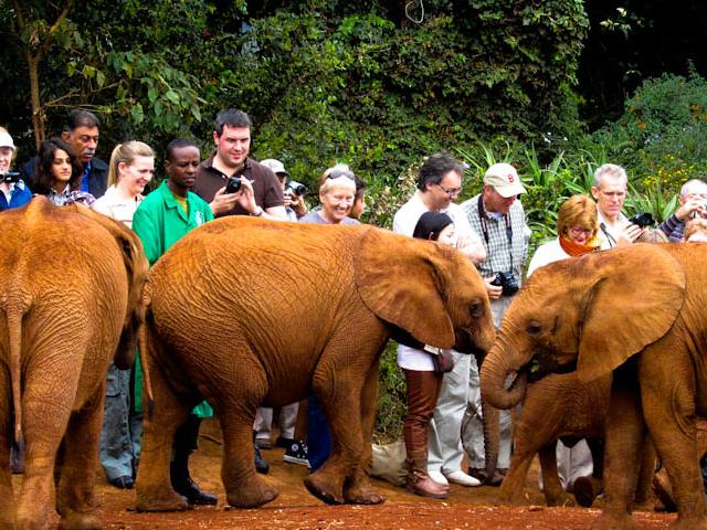 National Park, Girafee Center, Elephants Orphanage & Blixxen Photos