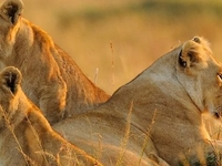 3 Days Masai Mara Group Camping Tour