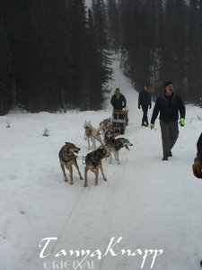 Dallas Seavey (Iditarod Champ) Dogs