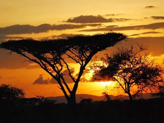 Safari Tour Package Photos