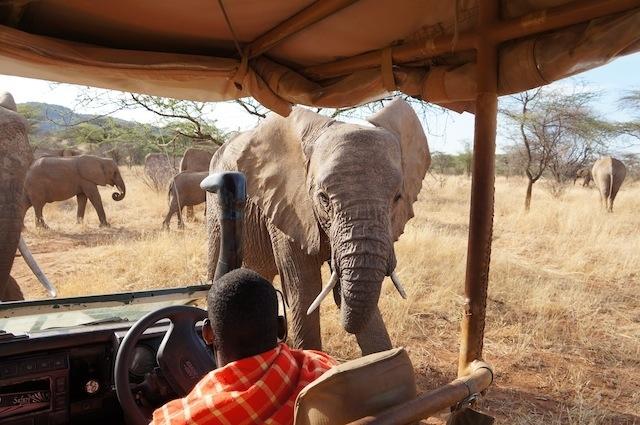 Lake Naivasha & Masai Mara Safari Photos