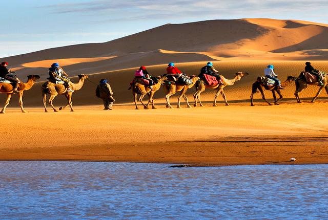 Camel Safari in Rajasthan Photos