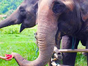 Best Cambodia & Thailand Tour in 2 Weeks Fotos