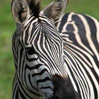 Avocet Tanzania Safaris Photo