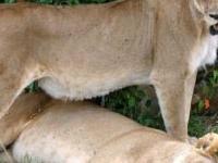 Kenya & Tanzania Safari Combo