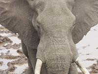 Img 0256 Elephant Reservoir