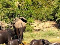 Img 2556 Elephants Bathing