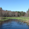 Salmon Brook