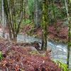 País de Gales Creek