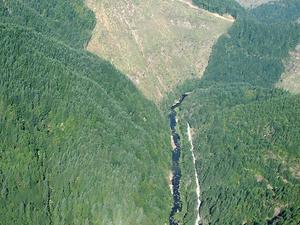 Williams River