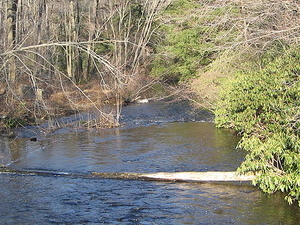 Negro Moshannon Creek