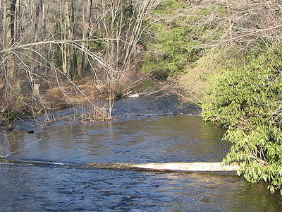 Black Moshannon Creek