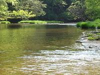 Kinzua Creek