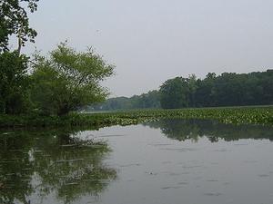 Little Creek Hunting