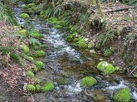 Coal Creek